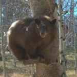 This bear didn't want to come down. Still sitting on the bird feeder.